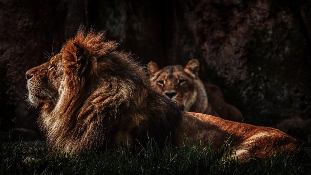 - Zoo 05 -