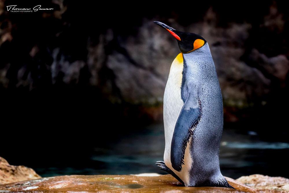 - Zoo 09 -