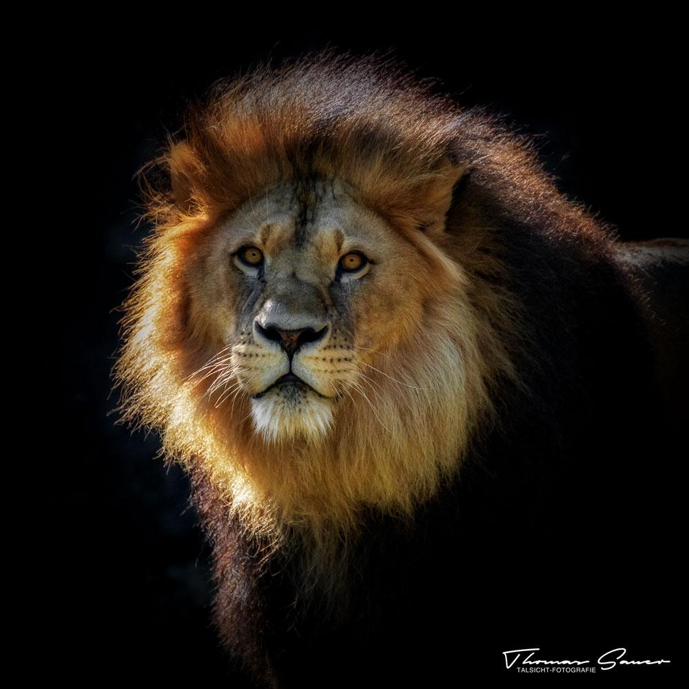 - Zoo 14 -