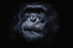 - Zoo 01 -