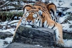 - Zoo 02 -