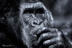 - Zoo 13 -