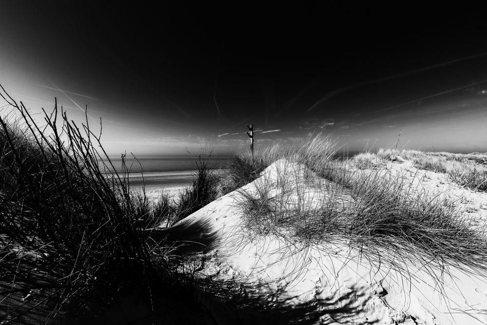 - Strand VII -