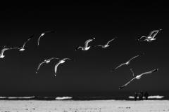 - Die Vögel -